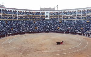 public-domain-images-Free-Stock-Photos-spain-Madrid-Corrida